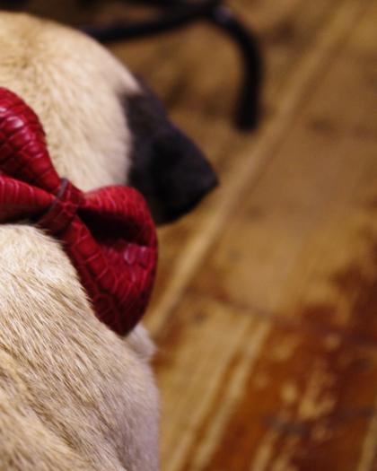 Specials/ DOG COLLAR